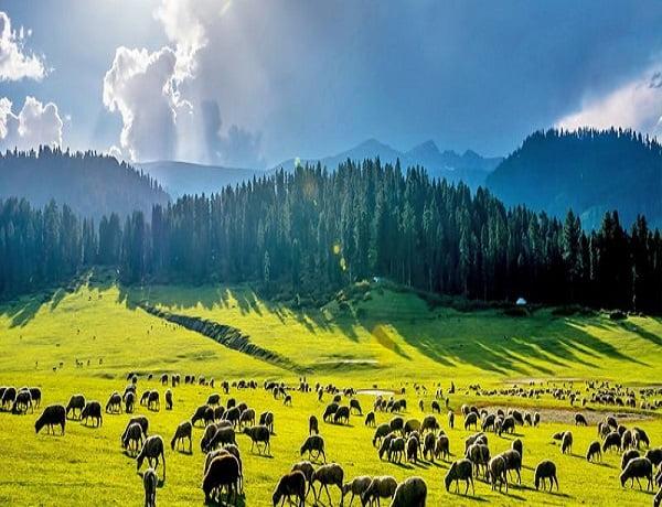 Yusmarg-Green-Kashmir-Travels
