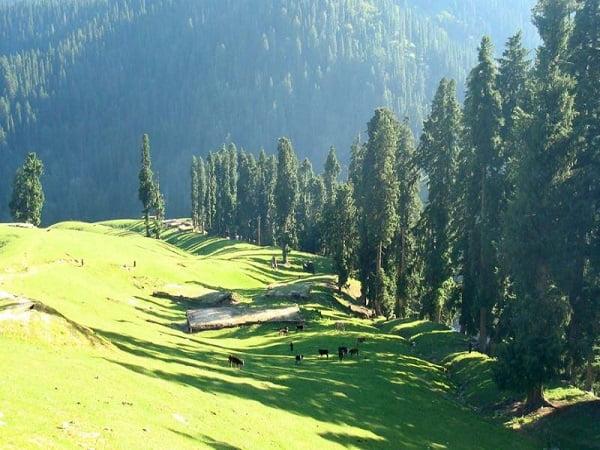 Bangus-Valley-Green-Kashmir-Travels