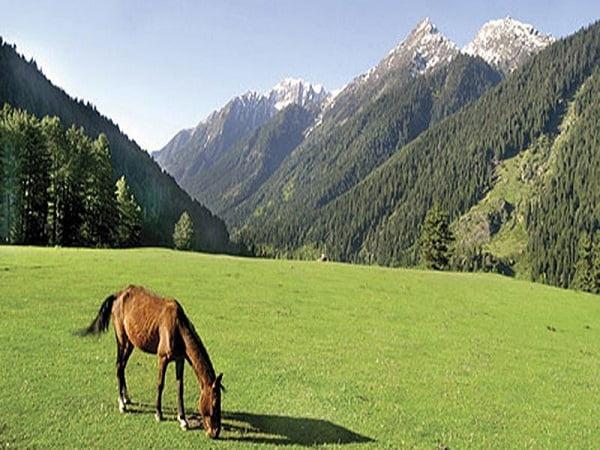 Doodhpathari-Green-Kashmir-Travels